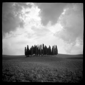 Daniel Grant Cypress Hill, 2006, Giclee Archival Print