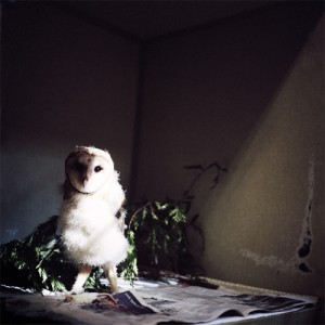 Annie Marie Musselman Baby Barn Owl, 2008 Inkjet Print