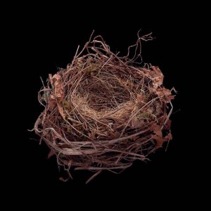 Darryl Schmidt Leafy Nest, Archival Inkjet Print