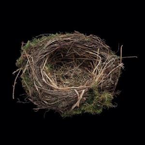 Darryl Schmidt Moss Nest, Archival Inkjet Print