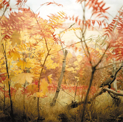 Nealy Blau, Untitled 2 , Denver Natural History Museum , 2005 Chromogenic Print Courtesy of G.Gibson Gallery