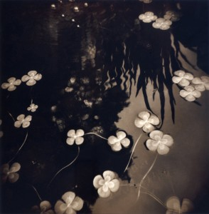 Jennifer Shaw Floating Clovers, 2001, Toned Gelatin Silver Print