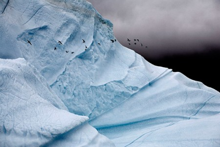 Camille Seaman, Iceberg Detail with Glaucous Gulls, East Greenland , 2006   	next »