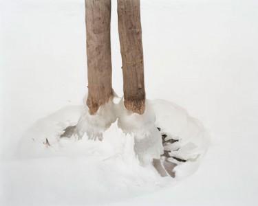 Lisa M. Robinson, Sentinel, 2007, C-Print