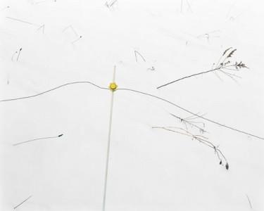 Lisa M. Robinson, Chord, 2007, C-Print