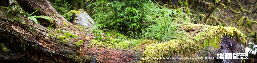 Michael Lane, Hoh Rain Forest Nurse Log, 2012