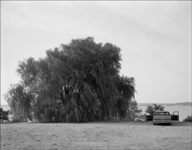 Willow Tree, 2002