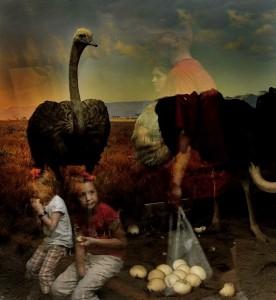Traer Scott, Ostrich 2