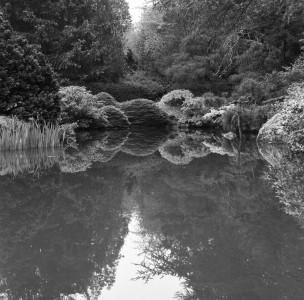 Ahlberg_Lisa_Kubota Gardens2_830am