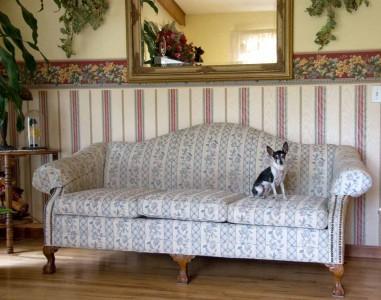 Anita Bingaman, My Cousin's Dog. They Live in Missouri, 2008