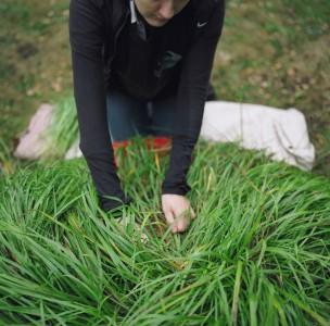 Annie Van Avery, Harvesting Sweet Grass, 2012
