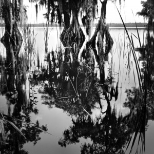 Benjamin Dimmitt, Lake Russell Disney Wilderness Preserve, FL