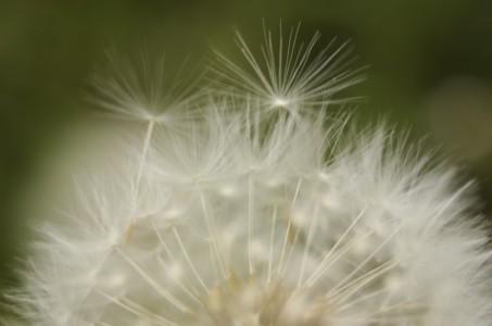 Brendicke_Jennifer_Fly Away Wishes_708pm