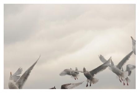 Chris Thompson, Seven Seagulls