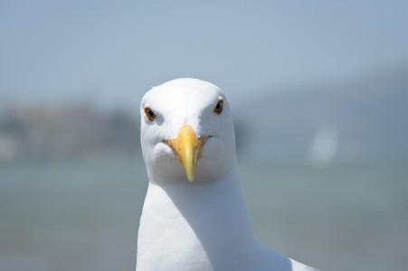 Davis Hawkins Olivia San Francisco Seagull Stare 225pm