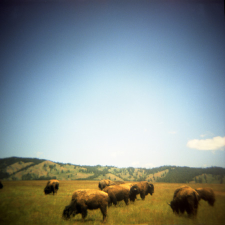 Kristin Giordano, Return of the Buffalo WA
