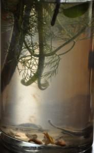 Lawrence_Rebecca_underwater_1212pm