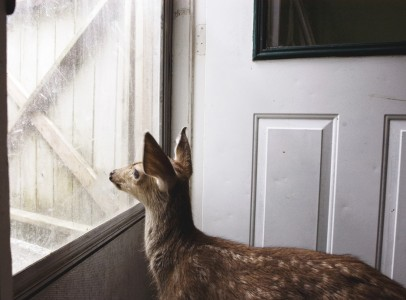 Annie Marie Musselman, Fawn with Bottle, 2008