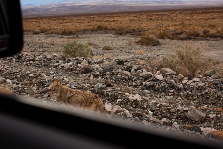 """Nancy LeVine, Coyote Moment, Death Valley, from the series """"Escape into America"""" 2009-10"""