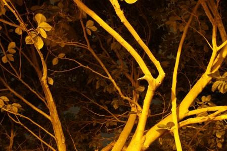 Sara Hansen Lund, Evening Tree 2042