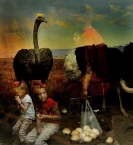 Traer Scott, Ostrich 2, 2009