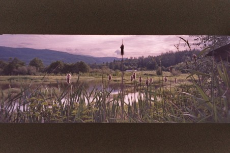 Stehman_Leilah_Cattails_Pano_630pm