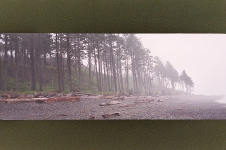 Stehman_Leilah_Trees_in_the_Mist_Pano_1220pm