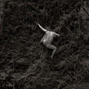 Thomas Schworer, Forest Rootball No. 17, 1996