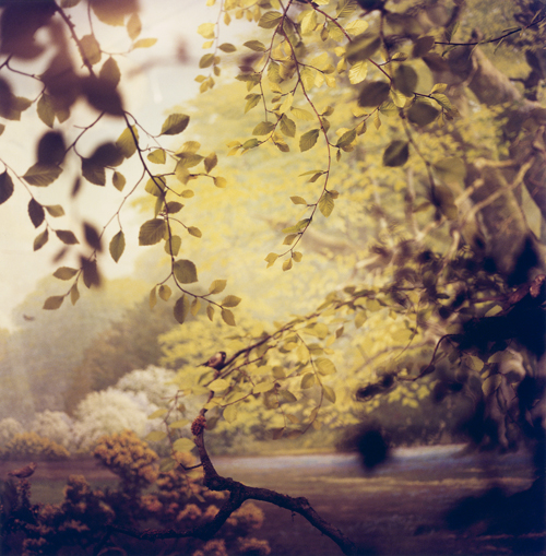 Nealy Blau, Clearing , American Museum of Natural History, NY, 2004 Chromogenic Print Courtesy of G.Gibson Gallery