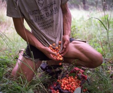 Cherries, Marble Mountain Wilderness, California