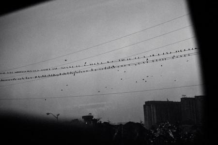David Adam Edelstein, Untitled 009