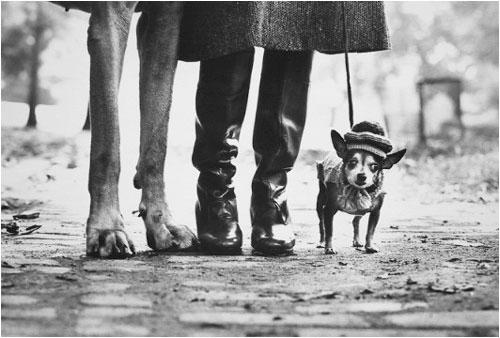 Elliott Erwitt, USA, NYC, Felix, Gladys, and Rover, 1974