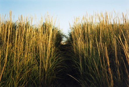 A Path in Grass, 2009 C-Print © Helen Vogel
