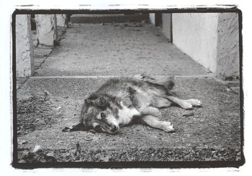Trusting Friend, 2009 Gelatin Silver Print © Lacey Kwak-Simon