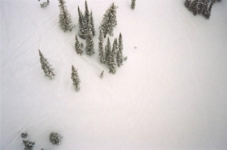 Trees from Lift, 2008 Chromogenic Dye Print © Andrea Bakacs