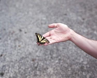 soldi rafael butterfly 1130am
