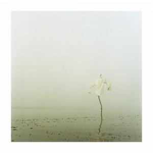 Darren Harvey-Regan, Sticks VI (from Sticks)